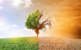 Banque Mondiale: Les pays en développement appellent à recapitaliser les Fonds d'Investissement Climatiques (FIC)