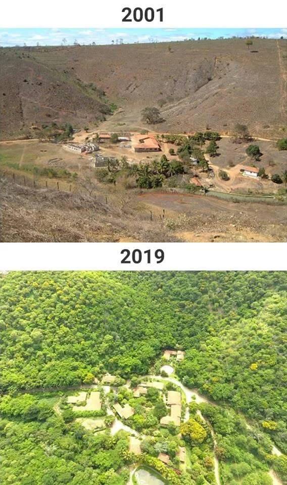 Un photographe brésilien a planté 2,5 millions d'arbres pour la reforestation de l'Amazonie