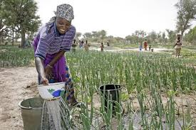 Fête du Travail : Si la richesse était le résultat inévitable du dur travail et de l'entreprise de projets, chaque femme en Afrique serait millionnaire » (Georges Monbiot) ...