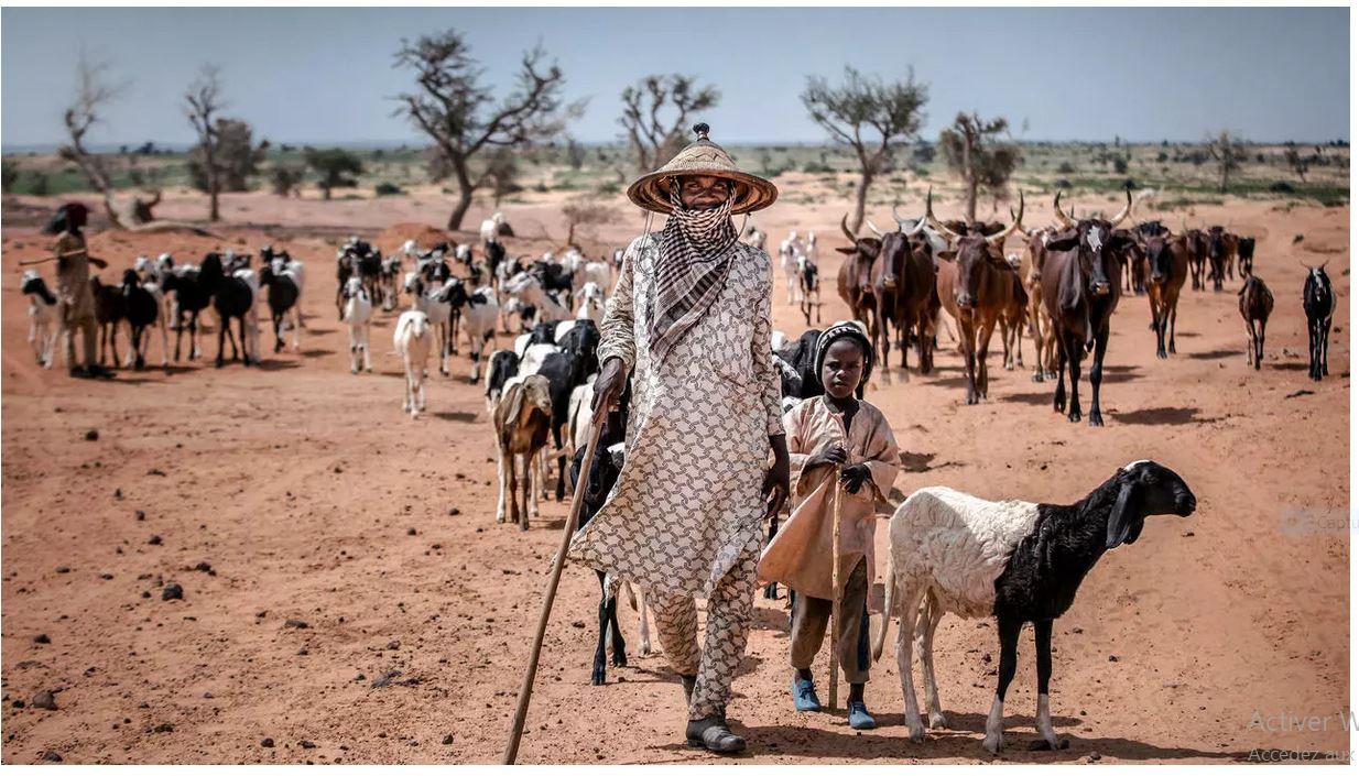 Sud-ouest du Niger: «l'aggravation de la crise du pastoralisme nourrit le recrutement du banditisme»
